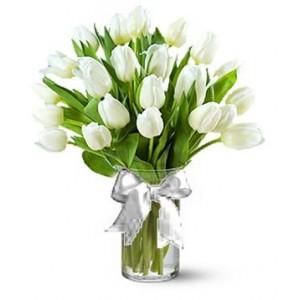 11 Първокласни Бели Лалета
