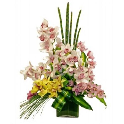 Класически орхидеи - Цимбидиум