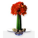 "Arrangement ""Amaryllis"""