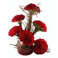 Спектакъл от червени рози