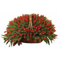 301 Червени лалета в кошница