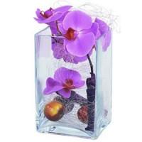 Орхидея в стъкленица